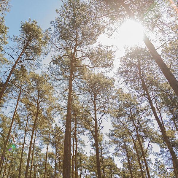Wald Nachhaltig Natur Bäume Baum Holz Laminatboden Laminat