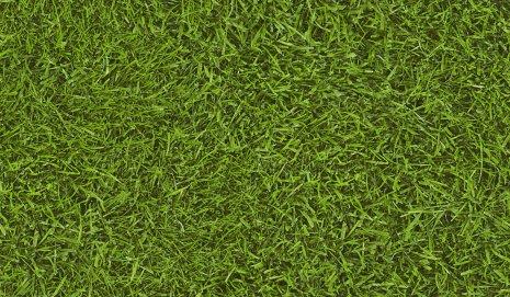 wineo PURLINE Bioboden Digital Weltmeisterrasen Sonderdekor Digitaldruck